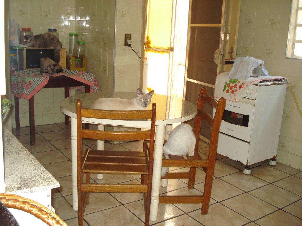 Cozinha do casa geminada com 3 dormitórios em BOQUEIRÃO - PRAIA GRANDE